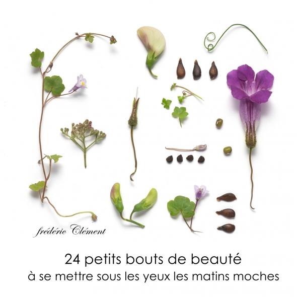 cachotterie, noir, botanique , galerie, minuscule, musique, curiosité, ravel