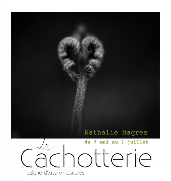 cachotterie, noiretblanc, galerie, botanique, minuscule, atelier, curiosité,rose