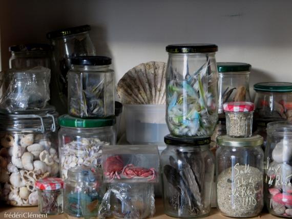 cachotterie, noir, corail, siren, botanique , galerie, minuscule, atelier, curiosité,rose